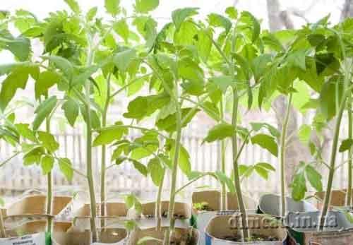 правила вирощування овочів на підвіконні взимку
