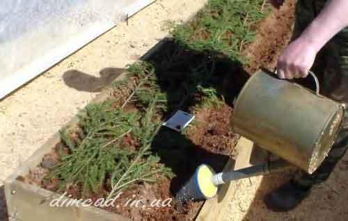 технологія вирощування моркви високий урожай