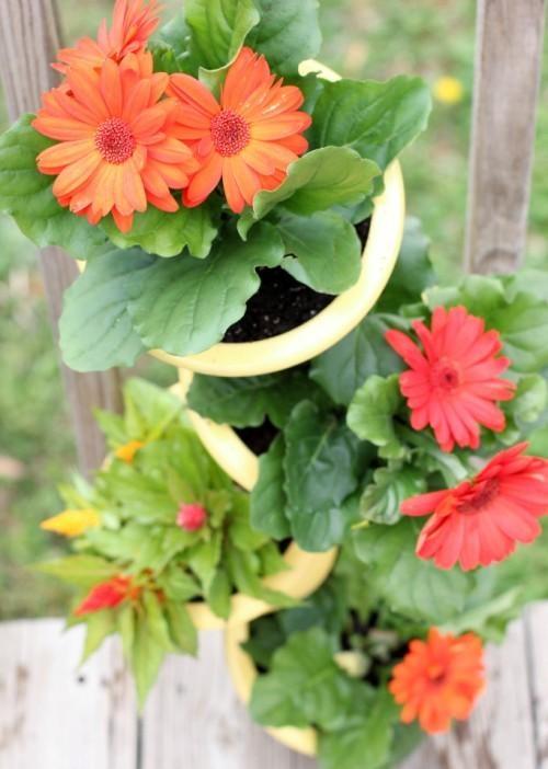 квітучий вертикальний сад